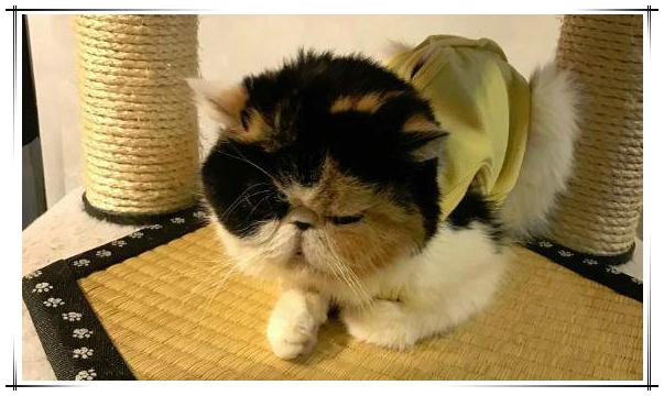 猫カフェ きゃりこ3