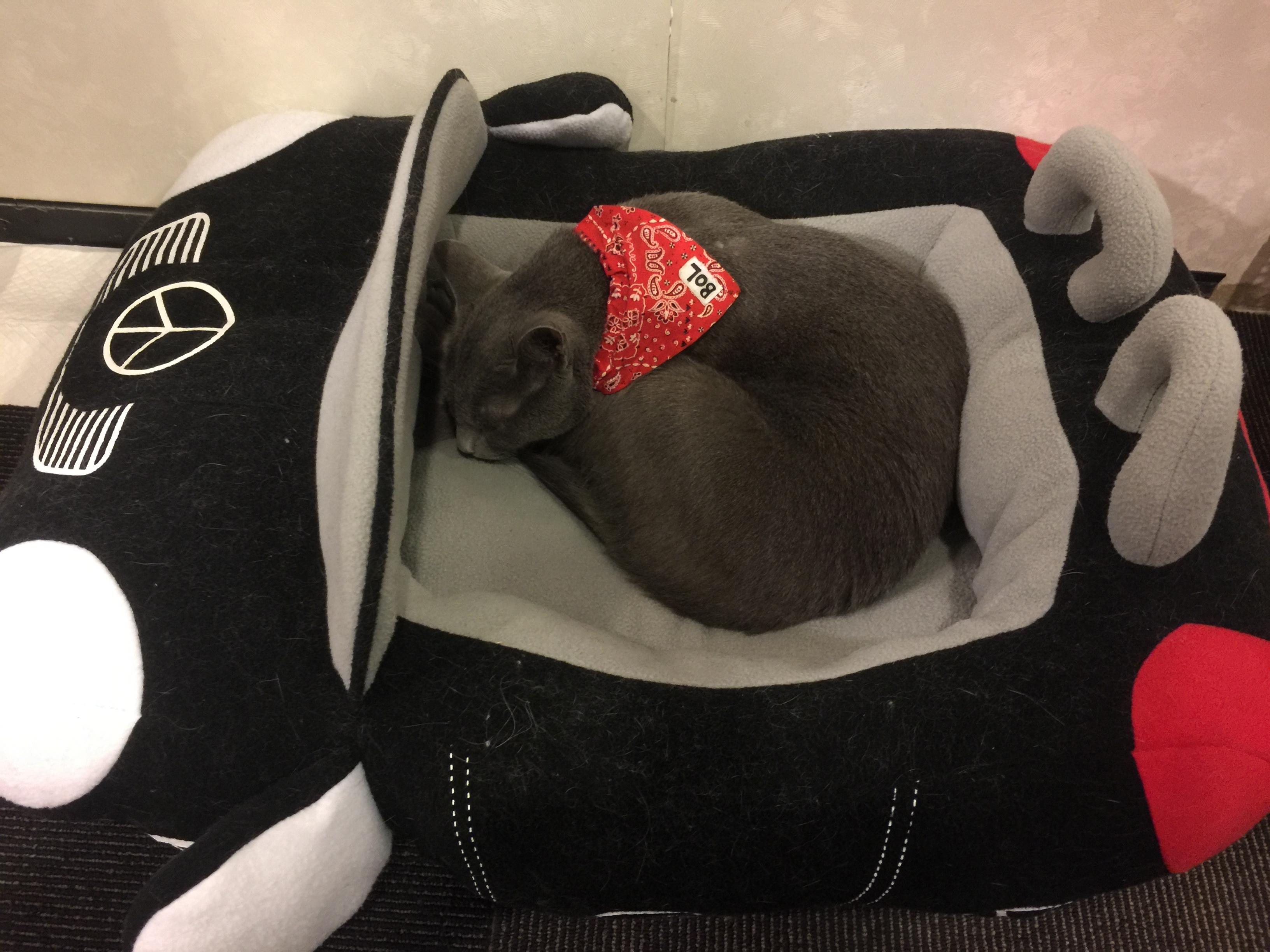 猫カフェ きゃりこ6