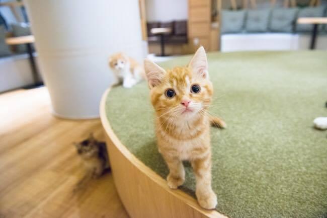 猫カフェ モカラウンジ5