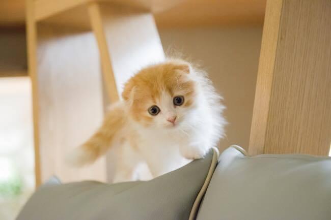 猫カフェ モカラウンジ6
