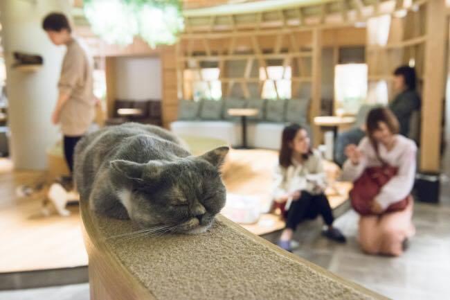 猫カフェ モカラウンジ4