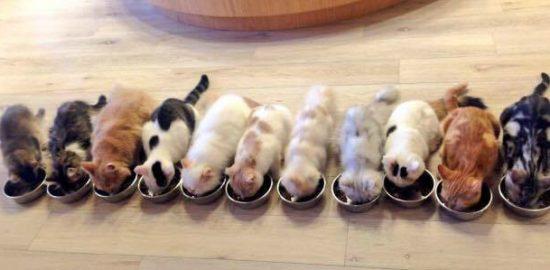猫カフェ モカラウンジ