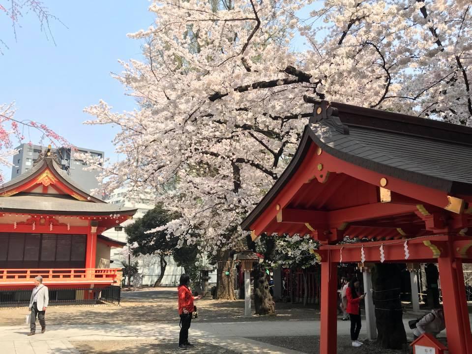 新宿花園神社7