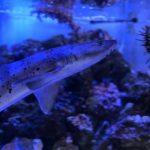 プリンスホテル ミニ水族館